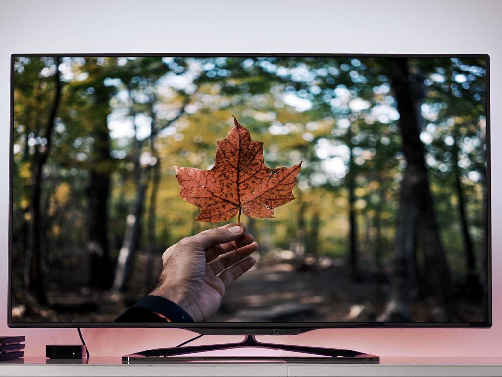 Maple leaf on TV screen